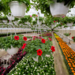 A Greenhouse Is Not a Building
